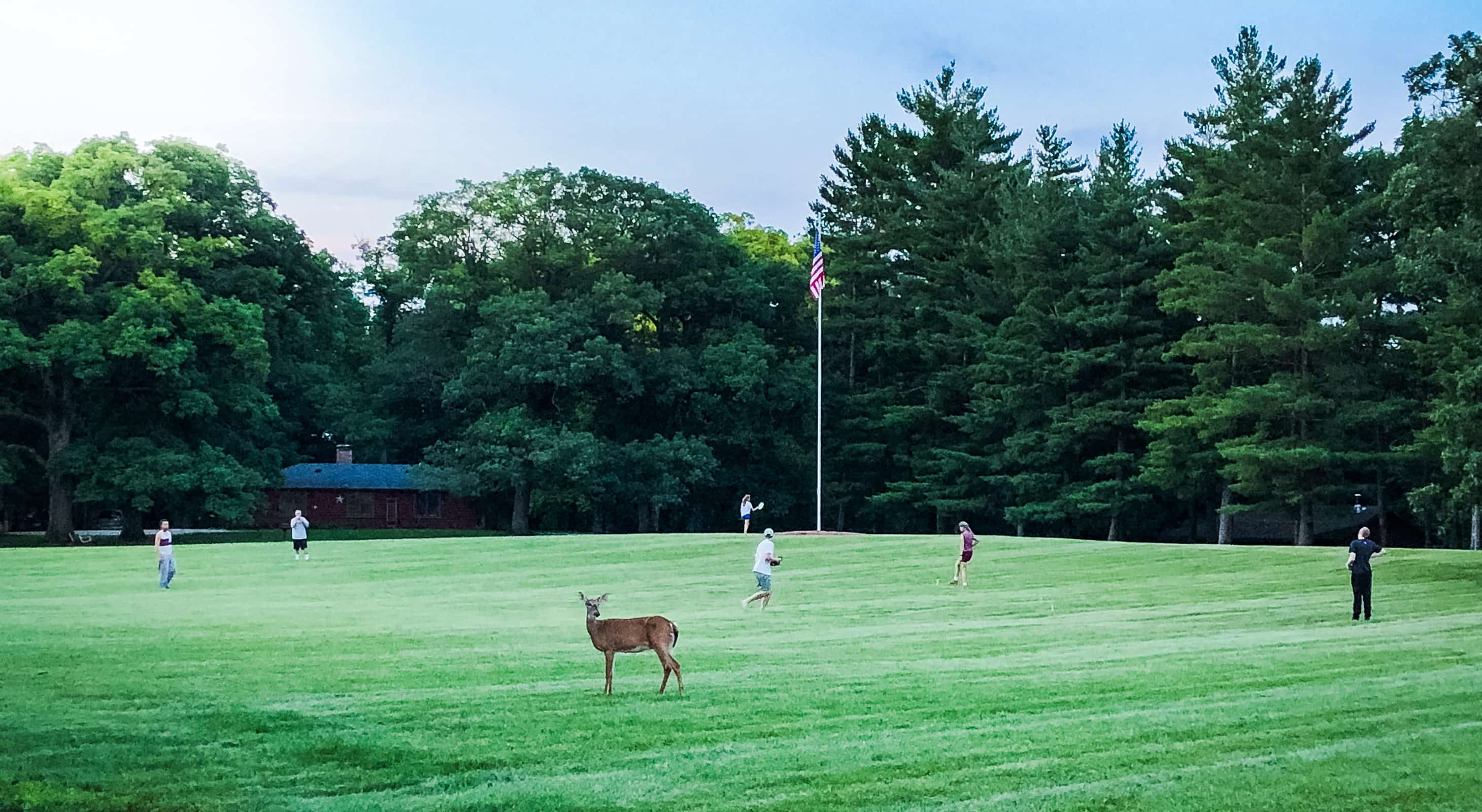 Deer in grassy field with people playing frisbee in background