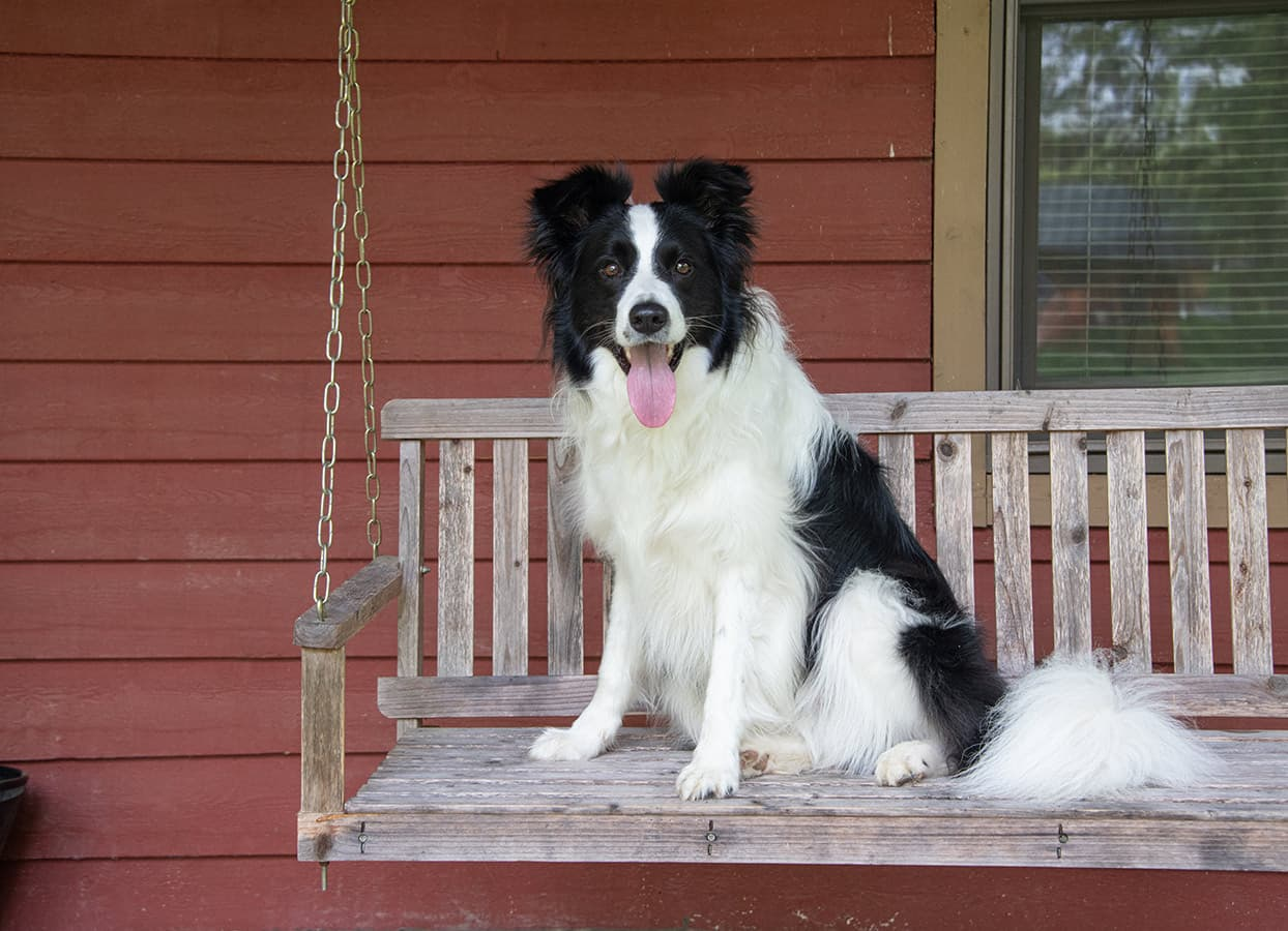 happy dog at our pet friendly Illinois cabins