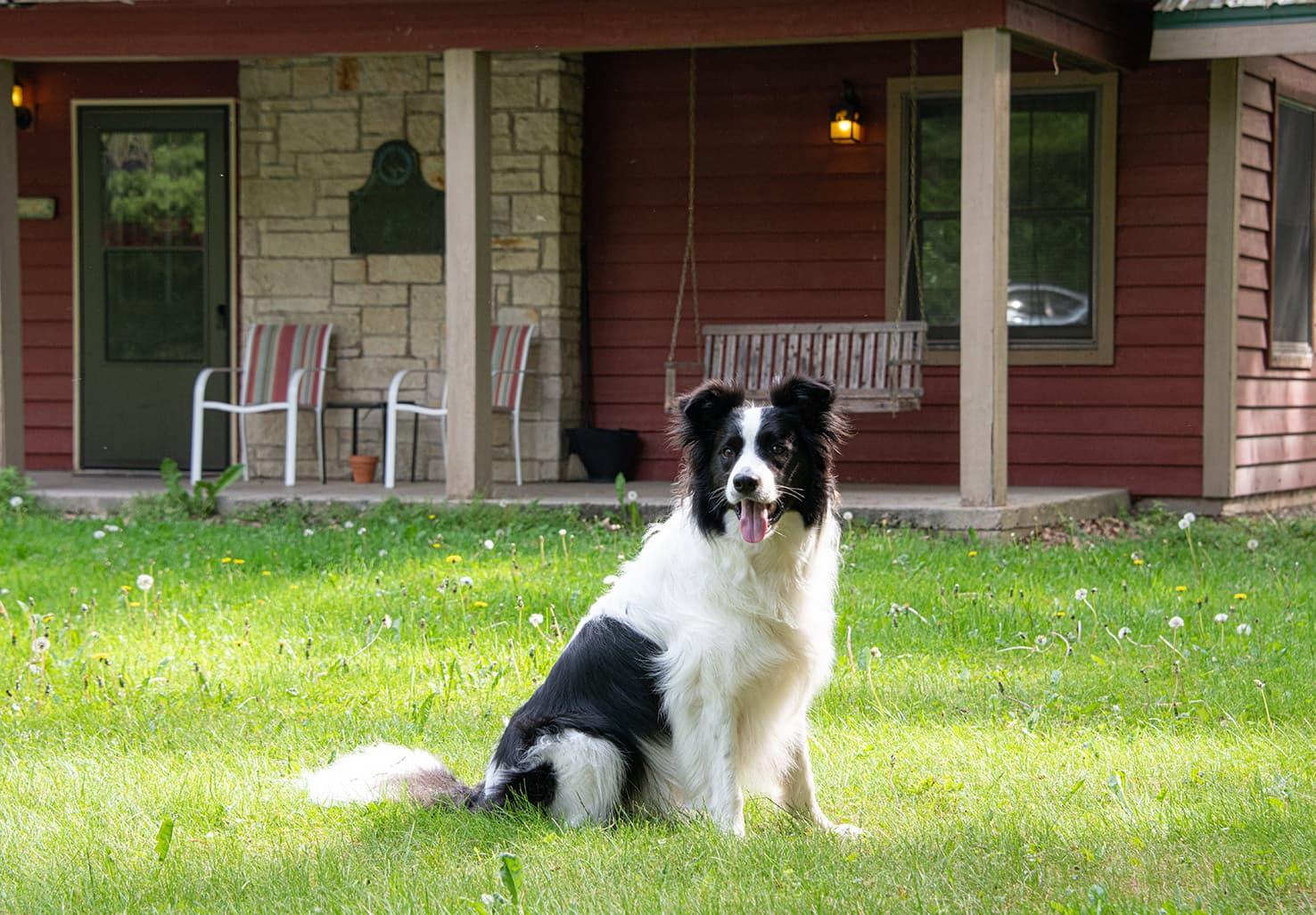 Dog friendly Illinois cabin
