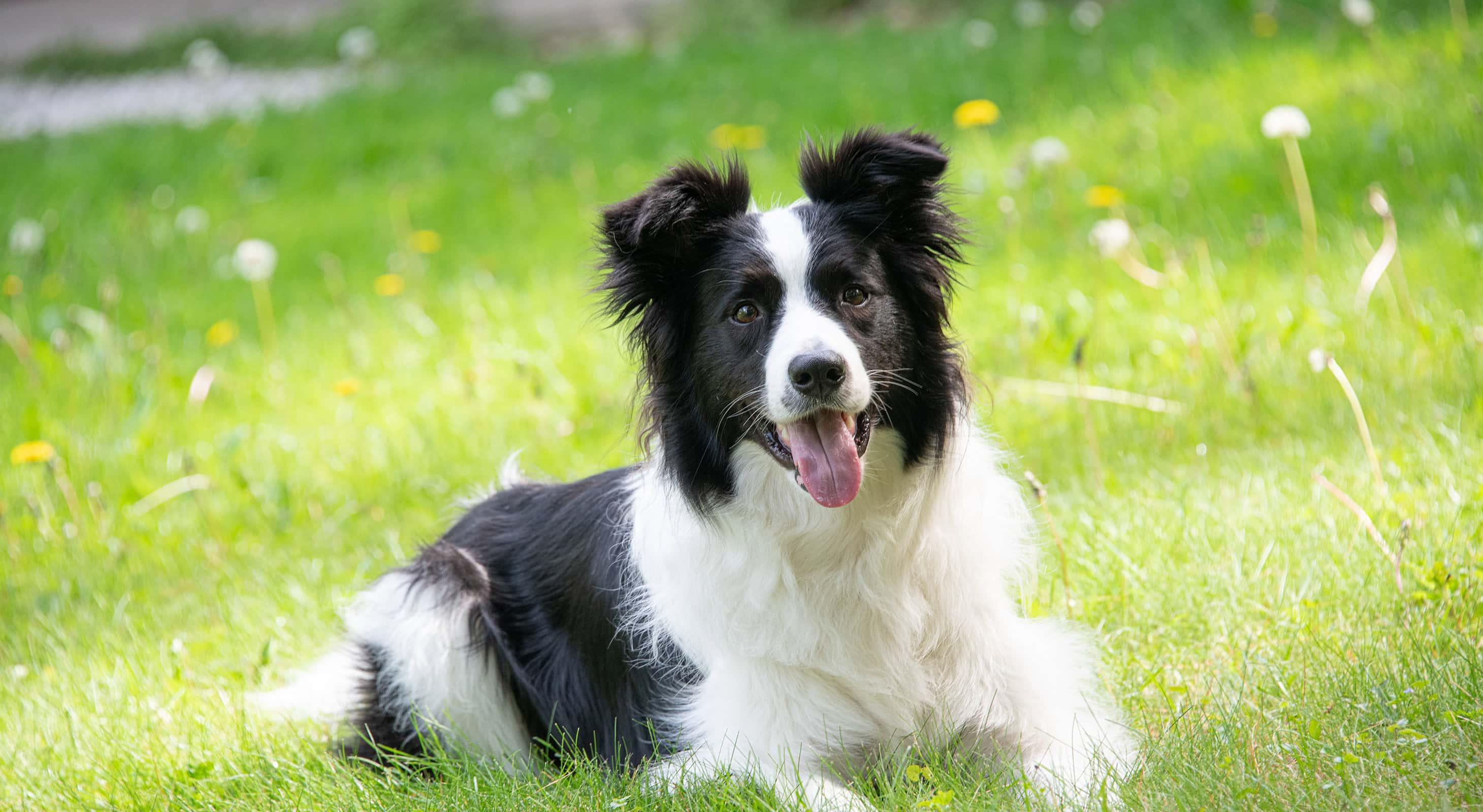 Happy dog in green grass