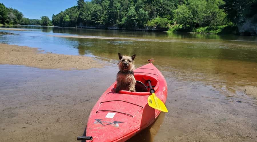 Cute dog in a red kayak on the river
