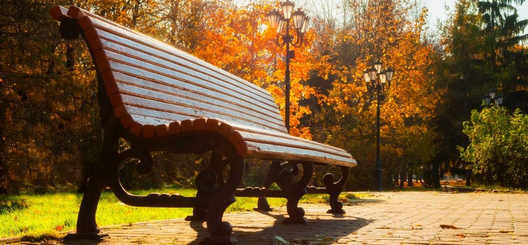 a bench in a park surrounded by fall leaves